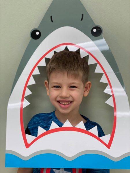 Shark photo 2